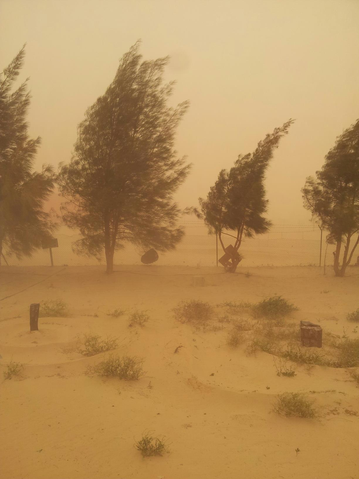 Sand Storm In Gialo