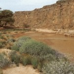 The Libyan desert: natural and human heritage under threat