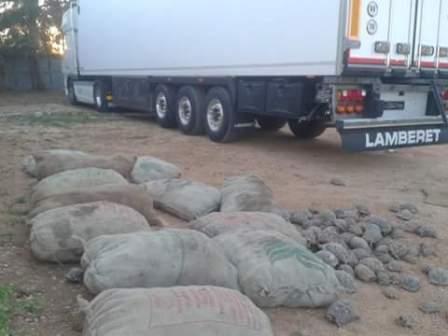 Tortoises seized last month at Marj (photo: LNA)