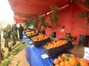 The orange festival featured a display of citrus fruit varieties grown locally (Photo: social media).